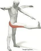 Dynamic-Leg2