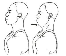 neckflexor